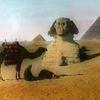Sphinx - Camel & Pyramids At Giza