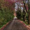 Spring In Ventiri Street.