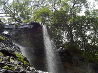 Sri Venkateswara National Park Treks