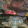 A Starfish At Aquarium Of The Bay
