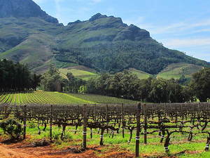 Stellenbosch Wine Tour From Cape Town Photos