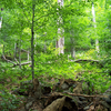 Carpathians Primeval Beech Forests