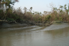 Sundarban From A Boat