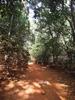 Sunset Point Jungle Trail - Matheran - Maharashtra - India