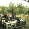 Game Drive In Sabi Sabi