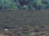 Sallandse Heuvelrug National Park