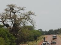 Gourma Province