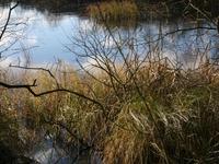 Skjern River