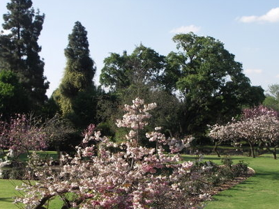 The Rose Garden In The Johannesburg Botanical Garden