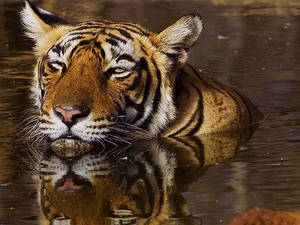 Rajasthan Tour 5 Night 6 Days (Tigers Tours) Photos