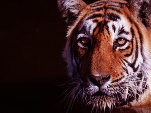 Ranthambore Tiger Reserve - Winter Bonanza !!