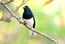 Ornithologist's Paradise
