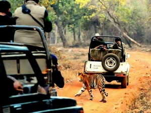 Tadoba Safari Package 2 Days Photos