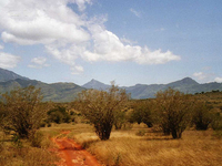Taita Hills
