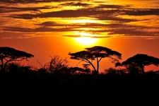 Tanzania Park Landscape - Sunset