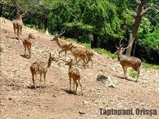 Taptapani Berhampur Odisha