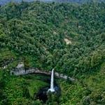 Taranaki Forest Area