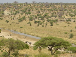 Overnight Safaris in the Tarangire/Ngorongoro/Serengeti/Manyara Photos