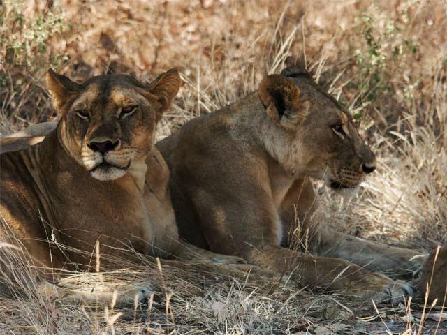 Safari in Tarangire - Serengeti & Ngorongoro Photos