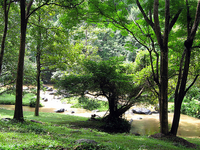 Tat Ton National Park