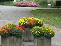 Tawes Garden