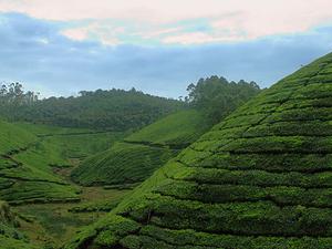 Misty Hills & Charming Backwaters Vacation 6 Days - Kerala Photos