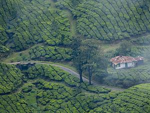 Wild Kerala Tour Package