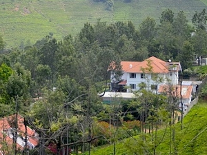 Tea Tasting & Wildlife Trail in Nilgiris