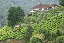 Teahouse In Cameron Highland
