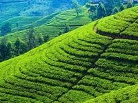 Amazing Tour in Sri Lanka