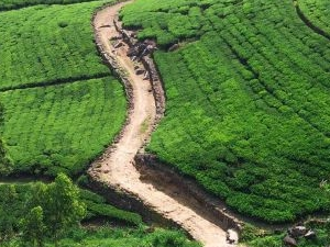 Tea Trails Of Ceylon Tour