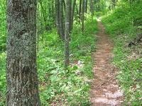 Telephone Trail 192