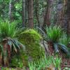 Te Panaa Hut To Taurawharona Hut Trail - Te Urewera National Park - New Zealand