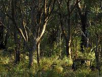 Te Pua Hut to Tataweka Hut Track