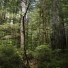 The Little Bald Hills Trail