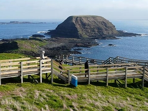 Phillip Island Little Penguins Parade Evening Tour Photos