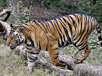 Bandhavgarh National Park