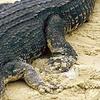 Tikarpada Wildlife Sanctuary