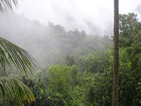 El Yunque Rain Forest