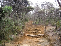 Trail To Summit Of Kinabalu