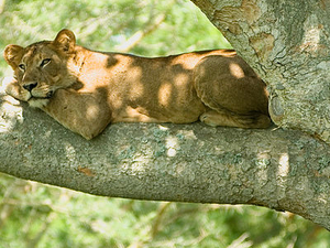 Safari To Ngorongoro and Lake Manyara National park Photos