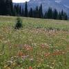 Trophy Flower Meadows