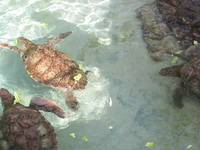Coral World Ocean Park