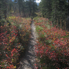 Two Medicine Pass Trail - Glacier - Montana - USA
