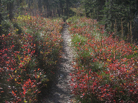 Two Medicine Pass Trail