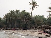 Arabian Peninsula Coastal Fog Desert