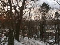 University Woods