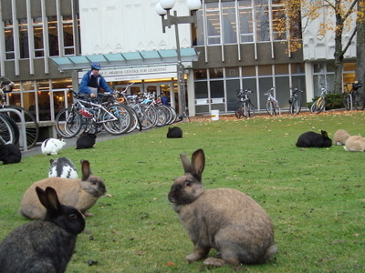 Rabbits On Campus