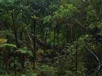 Ulva Isla