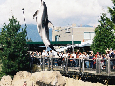 Dolphin At Vancouver Aquarium